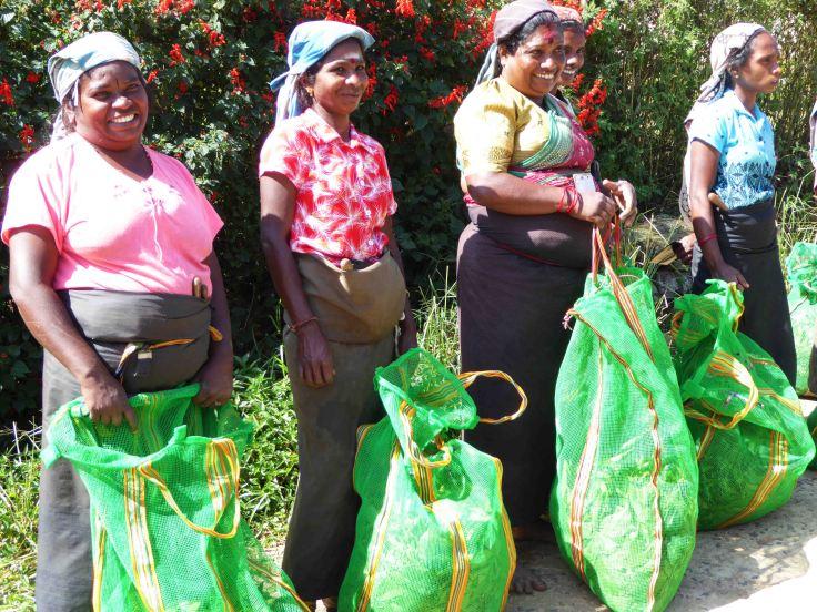 Tamil tea pluckers in Sri Lanka